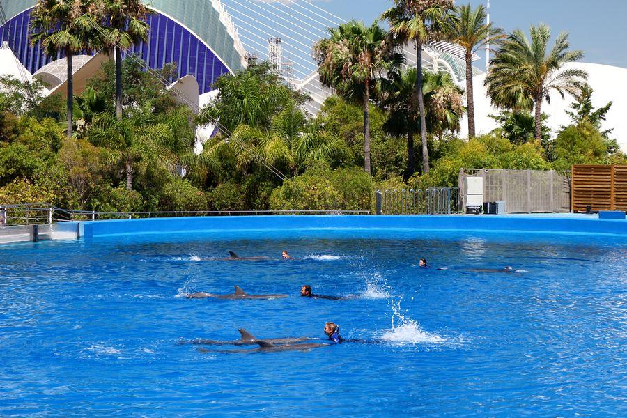 Valencia, океанариум